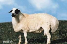 慎重!你所用的羊胎素护肤可能是羊胎盘提取物!